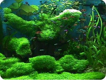 Фото аквариум с растениями