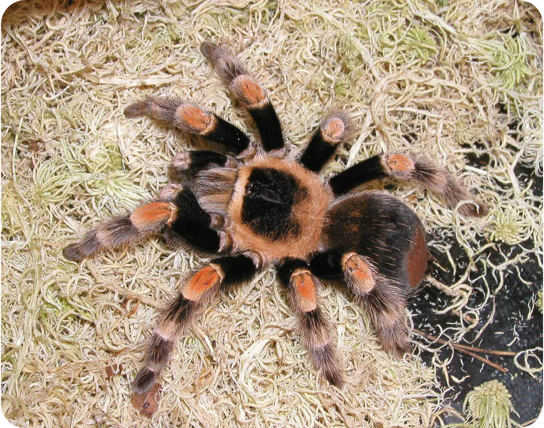 паук - Это бисер!