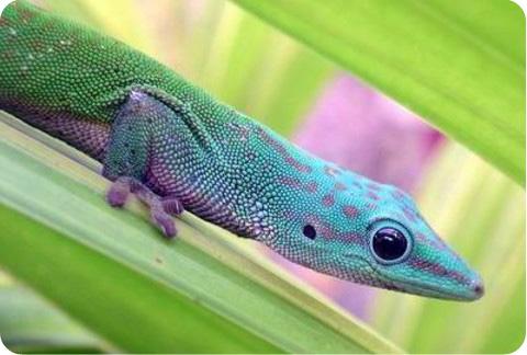 геккон в листве фото