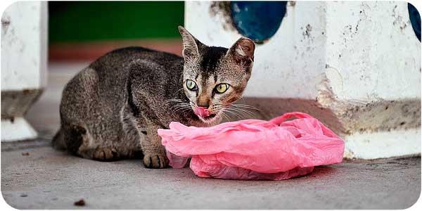 корм для кошки фото