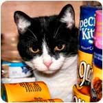 кошка и консервы фото