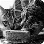 кошки и корм фото