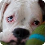 собака с игрушкой фото