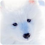 щенок фото