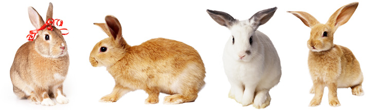 Декоративные кролики породы