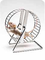 Содержание декоративных мышей