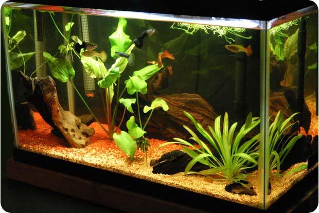 малыш, зайди нужно ли выключать воздух в аквариуме вкусно Мамочка родная