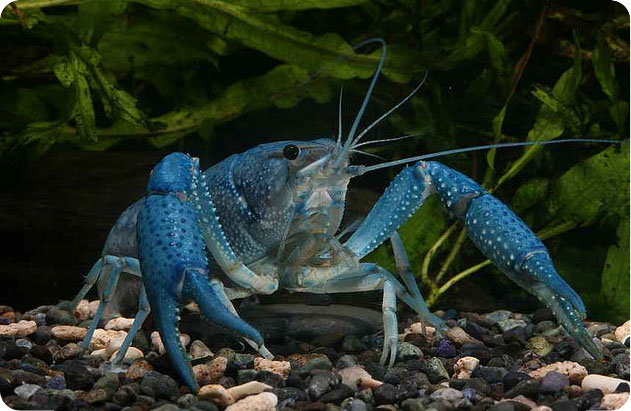 рацион флоридских раков